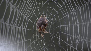Photo of Search Engine Spider – SEO Tutorial